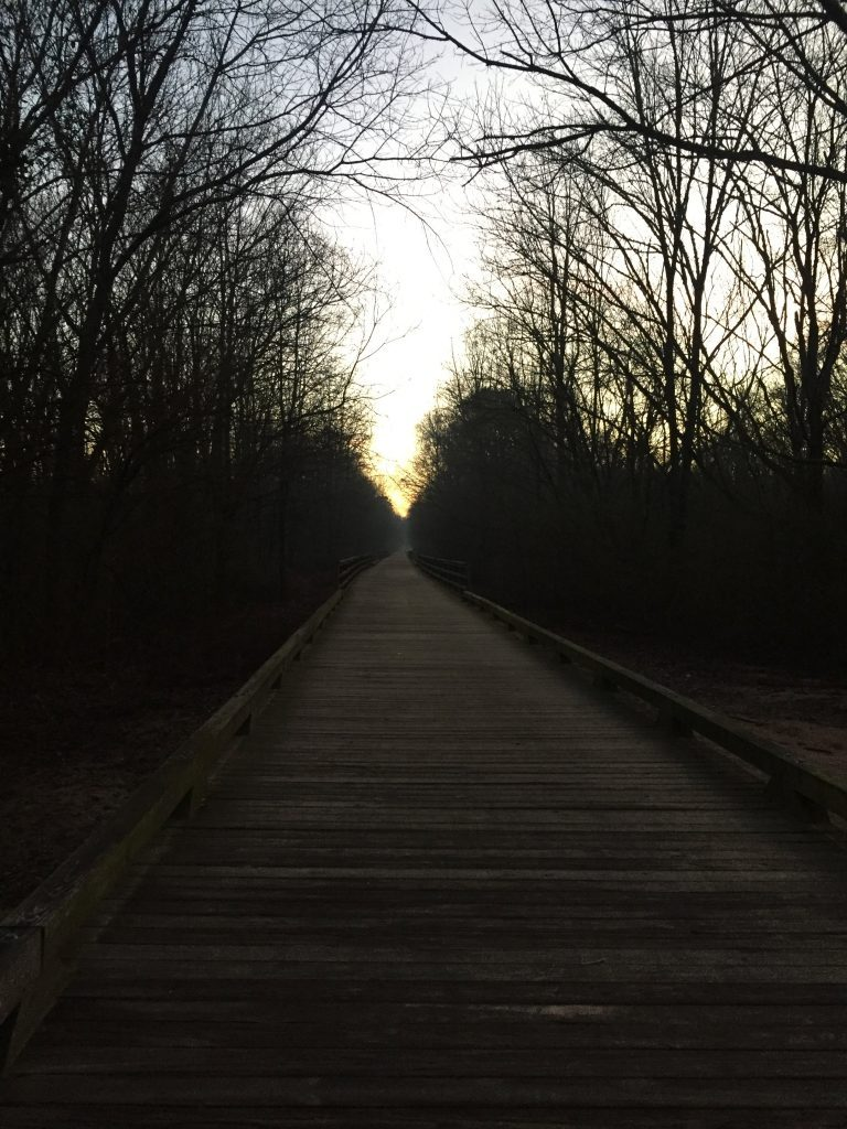 Greenway boardwalk at sunrise.